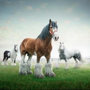 Conceptual Horses